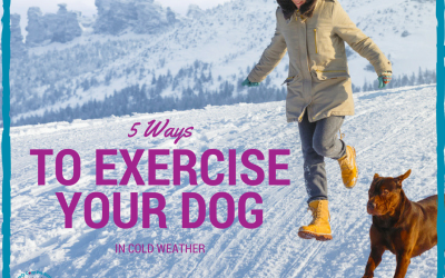 Fun Ways to Exercise With Your Dog In Cold Weather