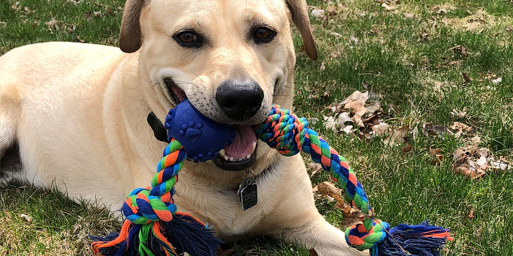 Professional Pet Sitters, dog, rope toy