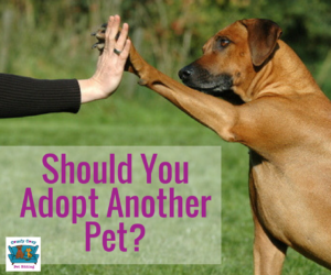 Should You Adopt Another Pet?