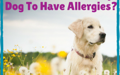 Is It Possible For My Dog To Have Allergies?
