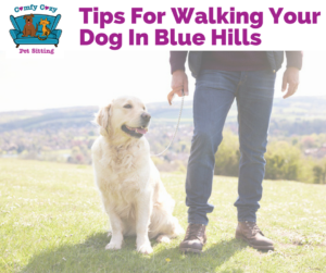 Tips For Walking Your Dog In Blue Hills