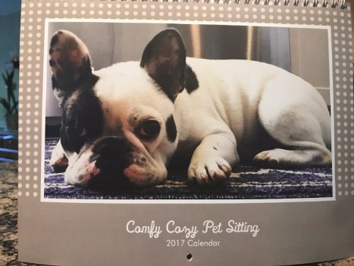 Comfy Cozy Pet Sitting, Kathy Henderson, pet sitting, dog walking, in home pet sitting, Professional Pet Sitters, Insured Pet Sitters, dog care, cat care, pet care, vacation pet care, pet sitters in Massachusetts, doggie sitting, Milton, Canton, Randolph