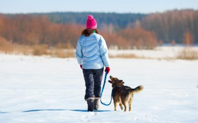 When Is It Too Cold For Your Dog?