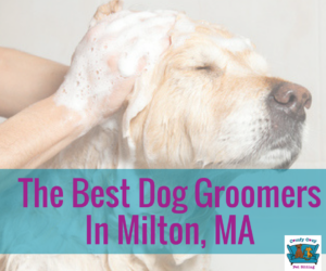 The Best Dog Groomers In Milton, Massachusetts