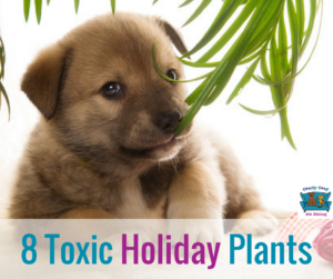 8 Holiday Plants That Are Toxic For Pets