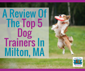 A Review Of The Top 5 Dog Trainers In Milton, Massachusetts