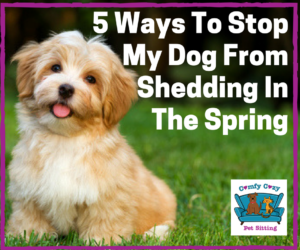 5 Ways To Stop The Dog From Shedding In The Spring