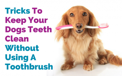 Tricks To Keep Your Dog's Teeth Clean Without Using A Toothbrush