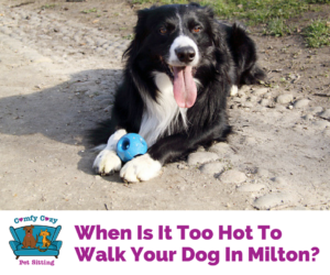 When Is It Too Hot To Walk Your Dog In Milton?