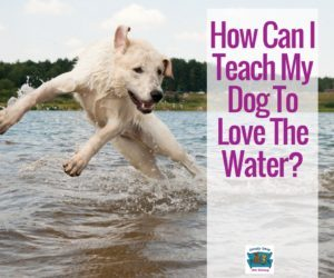 How Can I Teach My Dog To Love The Water?