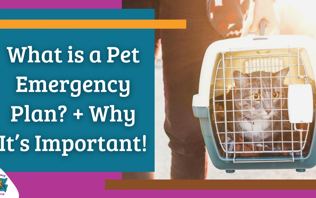 What is a Pet Emergency Plan? + Why It's Important!