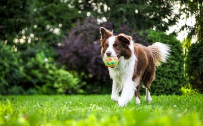 PET HEAT EXHAUSTION: How to Know If Your Dog Is TOO Hot?