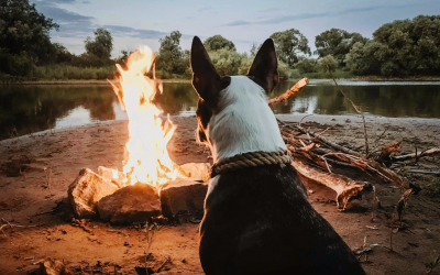 Best Places to Camp with Your Dog in Randolph Massachusetts This Summer
